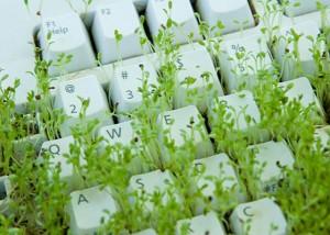 Los-negocios-ecologicos-salvan-la-crisis